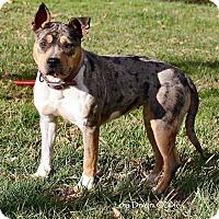 Adopt A Pet :: Valentina - Charlotte, NC