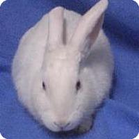 Adopt A Pet :: BJ - Woburn, MA