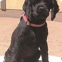 Adopt A Pet :: Romeo - Santa Barbara, CA