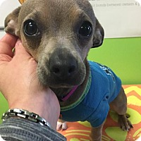Adopt A Pet :: Jessie - Estherville, IA