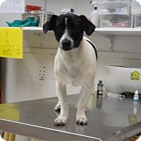 Adopt A Pet :: Heph - Gulfport, MS