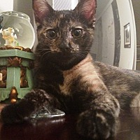 Adopt A Pet :: Fauna - Orange, CA