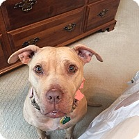 Pit Bull Terrier Mix Dog for adoption in simpsonville, South Carolina - Kyah