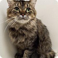 Adopt A Pet :: Bebe - Plainfield, IL