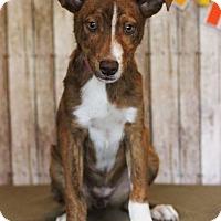 Adopt A Pet :: Echo - Waldorf, MD