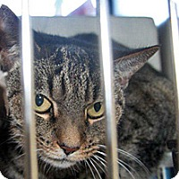 Adopt A Pet :: Baby - Wildomar, CA
