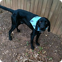 Adopt A Pet :: Clyde - Bogart, GA