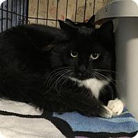 Adopt A Pet :: Mason (Special Needs) - Furlong, PA