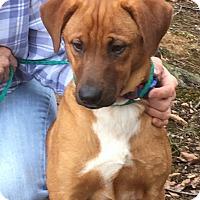 Adopt A Pet :: Roscoe - gorgeous! - Stamford, CT