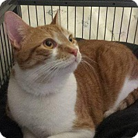 Adopt A Pet :: Cupid - Freeport, NY