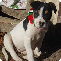 Adopt A Pet :: Nikki - Berkeley Heights, NJ