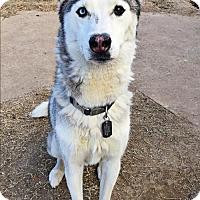 Adopt A Pet :: Wagner - Carrollton, TX