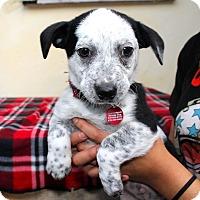 Adopt A Pet :: Wilson - Los Angeles, CA