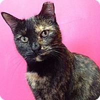 Adopt A Pet :: Miranda - Topeka, KS