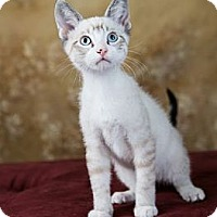 Adopt A Pet :: Snow Trillium - Eagan, MN