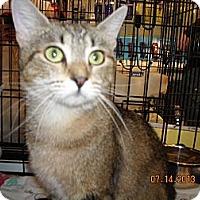 Adopt A Pet :: Candance - Riverside, RI