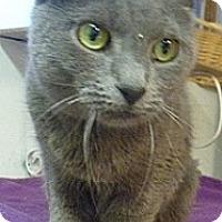 Adopt A Pet :: Corona - Hamburg, NY