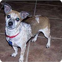 Adopt A Pet :: Lil Ricky - Scottsdale, AZ