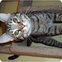 Adopt A Pet :: Wesley - Acme, PA