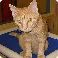 Adopt A Pet :: Fanta - Mobile, AL