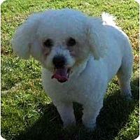 Adopt A Pet :: Chucky the Champ - La Costa, CA