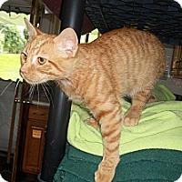 Adopt A Pet :: Brinker - Acme, PA
