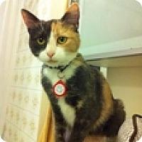 Adopt A Pet :: Adanac - Vancouver, BC