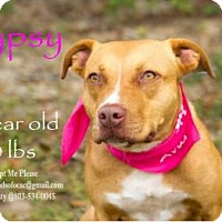 Adopt A Pet :: Gypsy - Orangeburg, SC