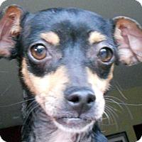Adopt A Pet :: Demi - Oakley, CA