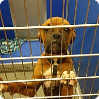 Adopt A Pet :: Owen - Reno, NV