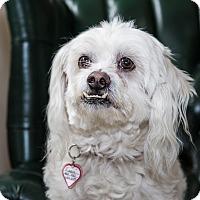 Adopt A Pet :: Pippin - San Dimas, CA