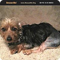 Adopt A Pet :: Robo - Dallas, TX