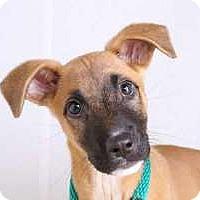 Adopt A Pet :: Babs - Sudbury, MA
