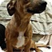 Adopt A Pet :: Bane - Harrisonburg, VA