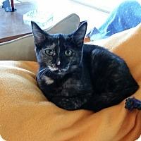 Adopt A Pet :: Puck - Modesto, CA