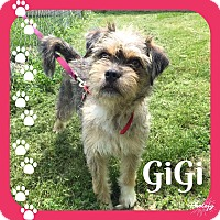 Adopt A Pet :: GiGi~~ADOPTION PENDING - Sharonville, OH