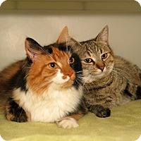 Adopt A Pet :: Hailey and Bailey - Milford, MA