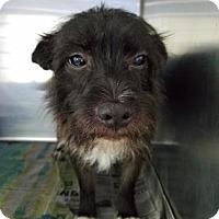 Adopt A Pet :: S/C Gordo - Miami, FL