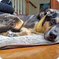 Adopt A Pet :: Molly(CL) - Greensboro, NC