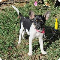 Adopt A Pet :: TILLY - Bedminster, NJ
