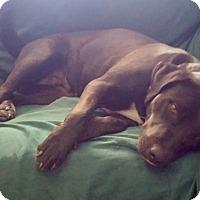 Adopt A Pet :: FREJA - Englewood, CO