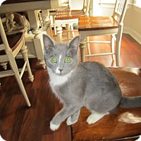 Adopt A Pet :: Lucky - Youngsville, NC