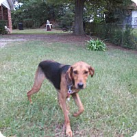 Adopt A Pet :: Eric - Newnan City, GA