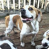 Adopt A Pet :: Autumn - Cleveland, OH