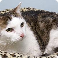 Adopt A Pet :: Sophie - Montclair, NJ