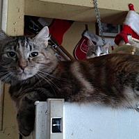 Adopt A Pet :: Julie - Benton, PA