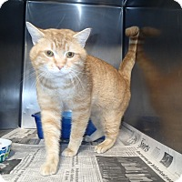Adopt A Pet :: Teddy - Newport, NC