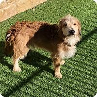 Adopt A Pet :: Aiden - Austin, TX