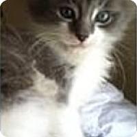 Adopt A Pet :: Willy - Hazard, KY