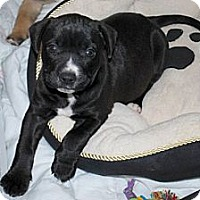 Adopt A Pet :: Lindsey - Minneola, FL